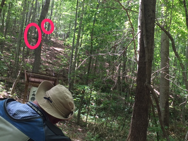 Keith looks at two difficult target placements on the Red Course, both uphill and in trees!