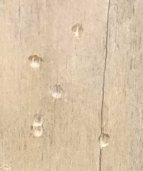 Smart Shot BBs wood target