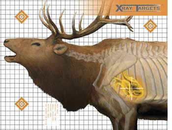 "Champion Elk X-Ray Paper Target, 36""x30"", 6ct"