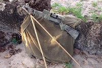 1077 tactical  - Hawaiian buffalo sticks..
